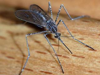 West Nile Virus spreads to 4th Colo. county