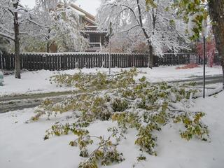 Boulder helping pickup downed trees, branches