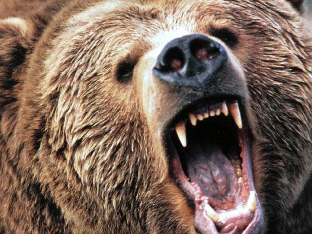 Angry Bear Face