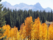 Where to see Fall colors in Colorado