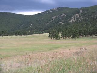 Elk-Meadow-Park-View-of-Bergen-Peak-16992949.jpg