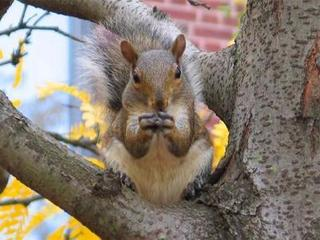 Squirrel-in-tree-13209543.jpg