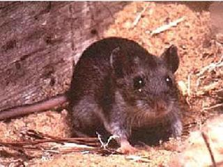 Case of hantavirus reported in Denver