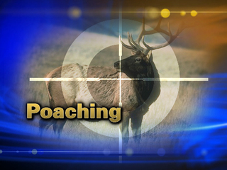 Elk Poaching
