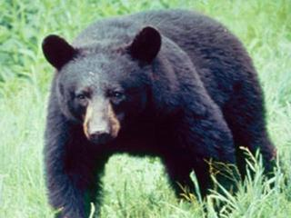 Hunter attacked by black bear in South Park