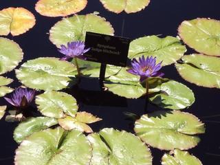 Botanic Gardens, Hudson Gardens summer concerts