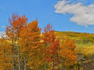 10 must-see Colorado festivals this fall