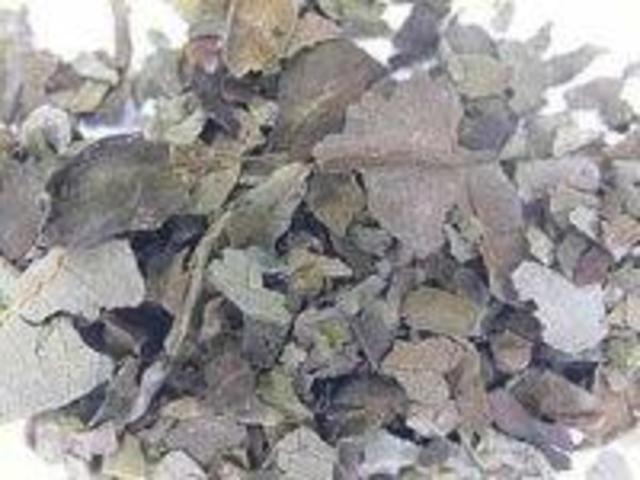 an analysis of two articles presentenced on the hallucinogenic drug salvia divinorum Salvia divinorum is widely cultivated in the us, mexico, central and south america and europe and is consumed for its ability to produce hallucinogenic effects similar to those of other scheduled.