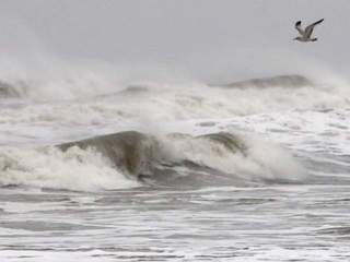 Seagull over waves from Hurricane Sandy-10946