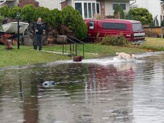Dog plays in street flooded by Sandy-10946