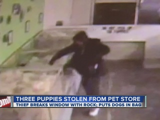 Brazen_thief_breaks_window__steals_pet_s_77160000_20121108055512