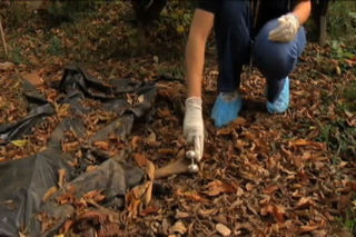 Body farm - knee demonstration