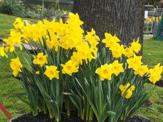 Debbie's Deals: Home & Garden Show flower sale