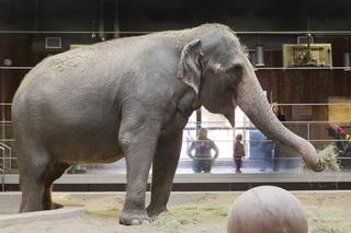 Applications open for teen zoo volunteer program