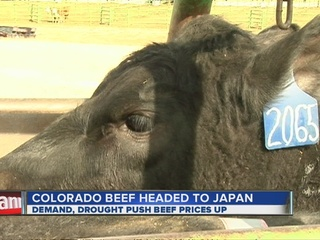 Colorado_Beef_Heading_to_Japan_407520000_20130317005931