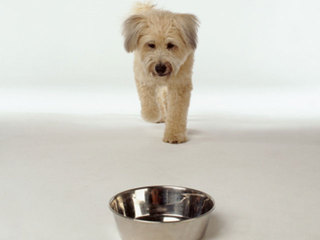 dog-food-bowl_1363713971345-10946.jpg