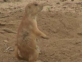 RTD looks for homes for prairie dogs