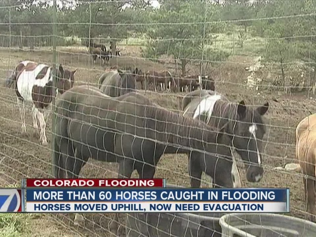 Horses need after Estes Park flooding