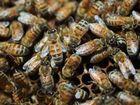 Bee swarm sends Padres running during practice