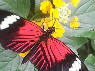 Discount days at Butterfly Pavilion