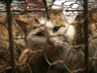 Nearly 70 cats removed from vacant home in Craig