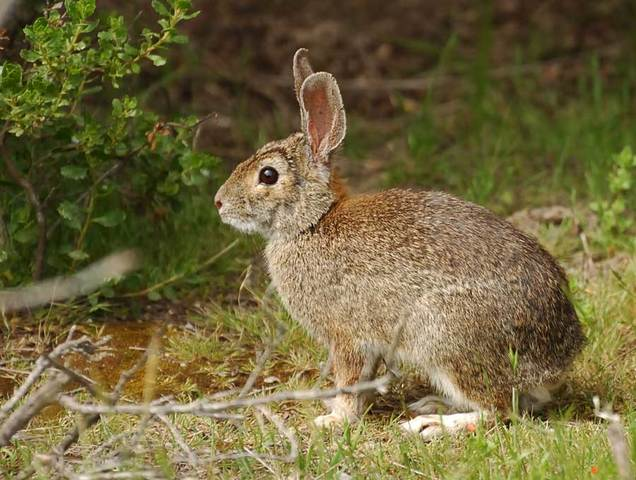 2nd human case of 'rabbit fever' found in Larimer County ...