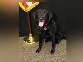Police K-9 left in car for 6 hours dies