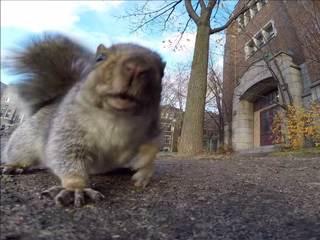 WATCH: Squirrel steals GoPro camera