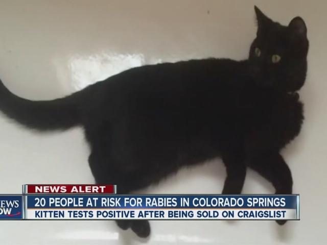 Denver Pets Craigslist   Autos Post