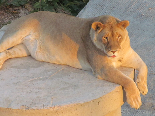 Wild animal sanctuary feeding times