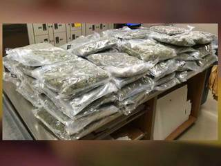 Legal pot market funds busts of illegal grows