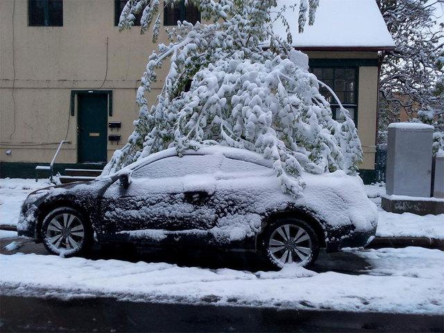 [Image: tree-heavy-snow_1431263670167_18060118_v...40_480.jpg]