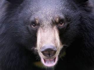Warm weather brings bear out of hibernatiion