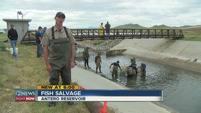 Thousands of fish salvaged as antero dam is drained for Antero reservoir fishing