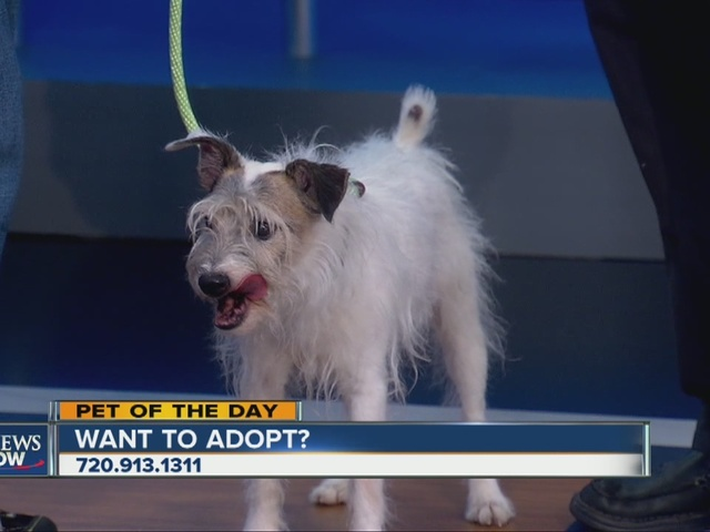 pet of the day for august 15  larry