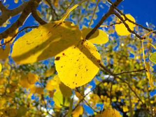 Where to go, and when, for fall colors in Colo.
