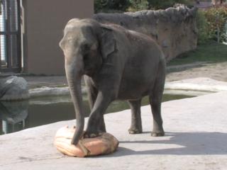 Pumpkin squash kicks off 'Boo at the Zoo'