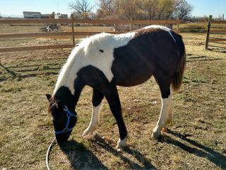Missing Fort Lupton horse found safe