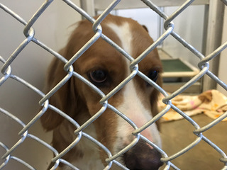 75 dogs seized from Adams County home