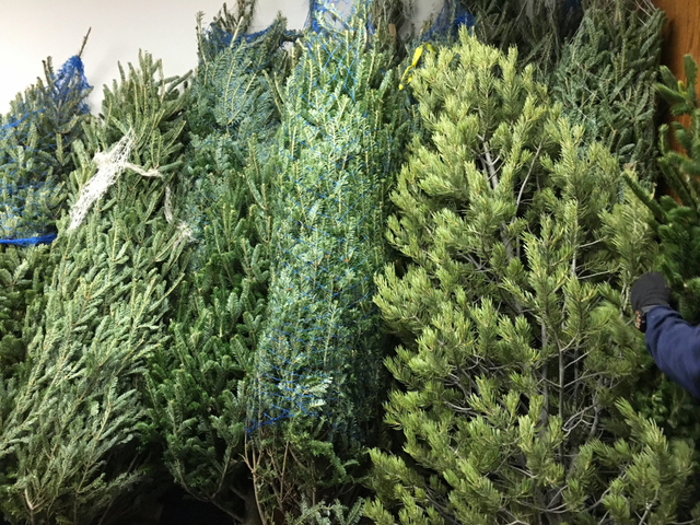 Where to recycle your Christmas tree in Denver, Aurora, Lakewood ...