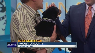 Pet of the day for January 3