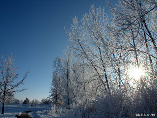 Frost crystals on Colo. trees Sunday