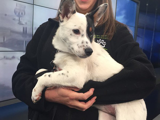 Pet of the day for January 10 - Ally