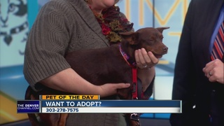 Pet of the day for January 17 - Sailor
