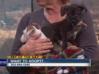 Pet of the day for Jan. 24: Puppies!