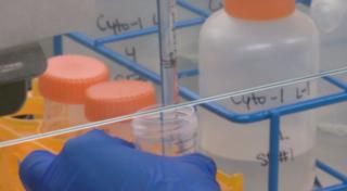 CSU developing a potentially life-saving vaccine
