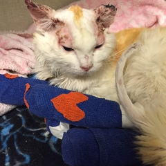 Cat helps owner cope with loss of husband