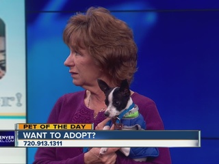 Pet of the day for Jan. 30 - Ritz
