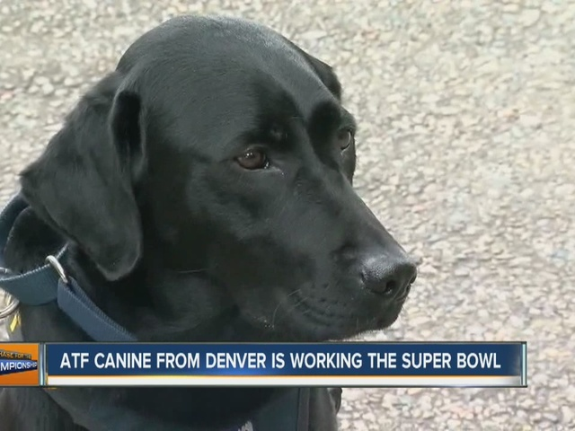 K-9 from Denver to work security during Super Bowl 50