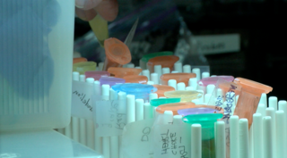 CU Boulder professors study plants, solve crime